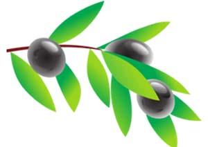Die Olive wird in der Bibel häufig genannt. Sie ist ein Symbol der Lebenskraft, des Friedens und der Liebe. In einigen christlichen Ritualen wird auch heute noch Olivenöl verwendet.